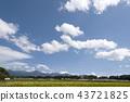 稻田 风景 水稻 43721825