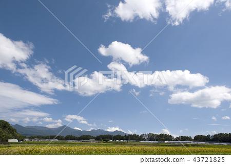 稻田风景 43721825