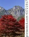 맑은 가을 하늘과 단풍 43721917