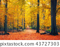 autumn, forest, fall 43727303
