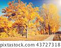 autumn, park, forest 43727318
