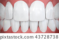 Frontal view on shiny white front teeth 43728738