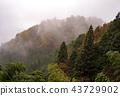 autumn, autumnal, maple 43729902