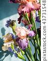 Bunch of coloful fresh irises 43731548