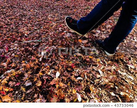 秋天的地毯 43733046