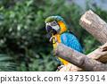 神戶動物王國的Ruri金剛鸚鵡 43735014