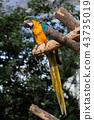 고베 동물의 왕국 루리 잉꼬 43735019