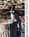 고베 동물의 왕국 반지 꼬리 43735027