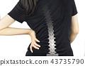 spine bones injury 43735790