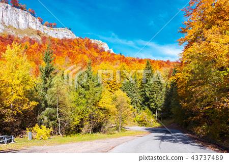 road through gorgeous serpentine in autumn forest 43737489