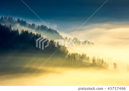 deep fog above the valley at sunrise 43737496