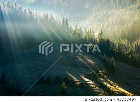 light through fog in forest on hill 43737497