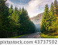 road through deep spruce forest 43737502