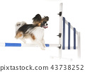 training of agility 43738252