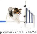 training of agility 43738258