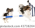 training of agility 43738264