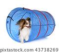 training of agility 43738269