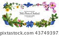 Head banner from wild plants of Scotland  43749397