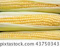 Background of grains of fresh ripe sweet corns. 43750343