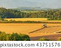 황혼의 보리밭 수확 비 에이 43751576