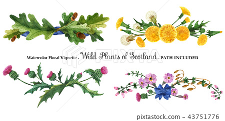 Vignette from wild plants of Scotland 43751776