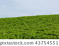 감자 밭 비 에이 43754551