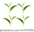 tea leaf on white background 43754999