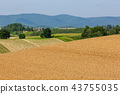 비 에이의 보리밭 43755035