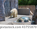 아사히야마도부츠엔, 아사히야마 동물원, 백곰 43755870