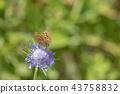 곤충, 벌레, 나비 43758832