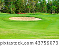 Sand bunkers and green golf field  43759073