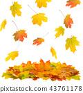 autumn, leaf, fall 43761178