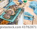 Pufferfish was brought up from sea. Blown to sell 43762871