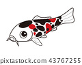 fish, fishes, colored 43767255