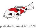 물고기, 생선, 비단잉어 43767279