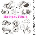 Tropical Fruits Sketch 43769062