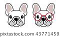 개, 강아지, 프렌치 43771459
