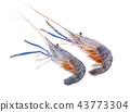 Giant freshwater prawn isolated on white  43773304