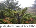 아오모리 토도마츠, 소나무, 자연 43773865