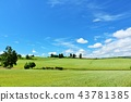 ท้องฟ้าสีฟ้าและทุ่งโซบะในฤดูร้อนของฮอกไกโด 43781385