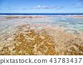 in polynesia the rocks of the coastline 43783437