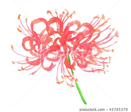 花朵 花 花卉 43785379