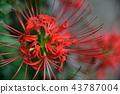 [幻想]迷人的花朵 43787004