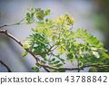 branch of green leaf (vintage tone) 43788842