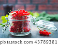 red currant 43789381