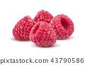 Raspberry isolated on white background 43790586
