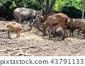 Deers in the zoo 43791133