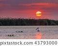 Danube Delta, Romania 43793000