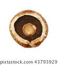 One brown portobello mushroom isolated on white 43793929