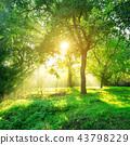 Green forest landscape background at sunrise. 43798229